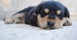 Hundebetten